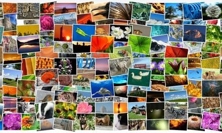 A rischio gli obiettivi di salvaguardia della biodiversità al 2020