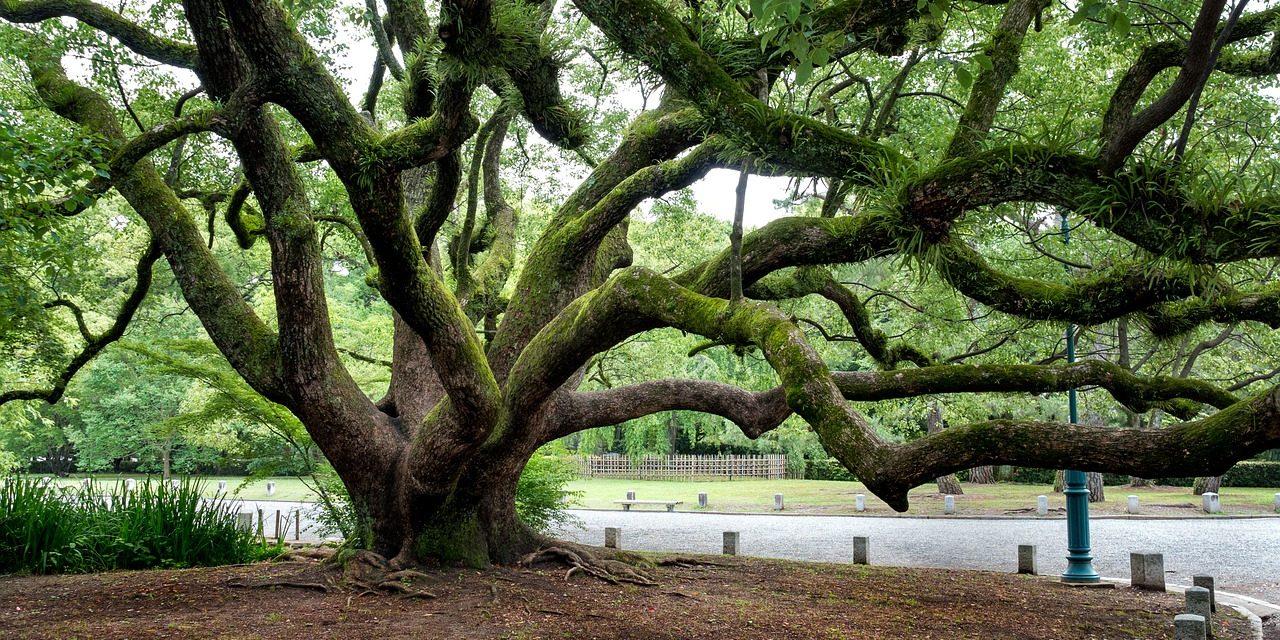 Nuove scoperte per l'albero del corpo umano