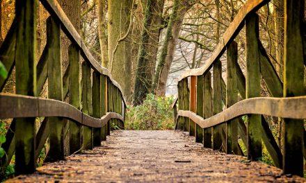 Mindfulness: consapevolezza e ristoro della mente