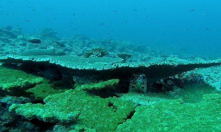 Cos'è la Giornata Mondiale degli Oceani